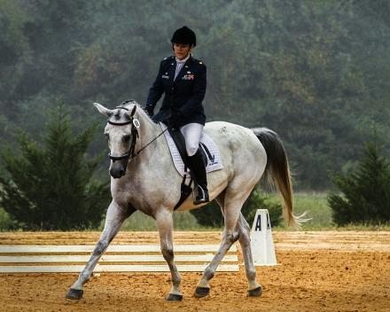 Paarden en ezels